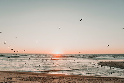 View of flying birds at the beach in the sunset, Costa Nova, Portugal - p300m2139610 by Hernandez and Sorokina