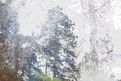 Le printemps 03 - p987m2219008 by Célia Swaenepoel