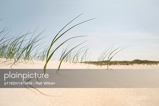 Strandgras am Borkumer Strand - p1162m1475406 von Ralf Wilken