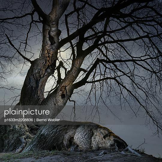 Whatever lies Sleeping - p1633m2208836 by Bernd Webler