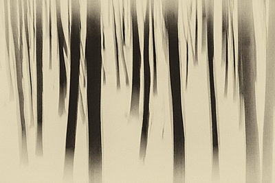 Wald - p1205m1515967 von Toni Anzenberger