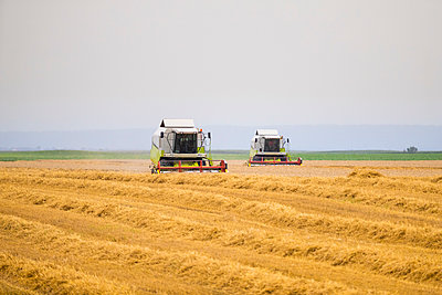 Serbia, Vojvodina, Combine harvesting wheat fields - p300m2023749 von oticki
