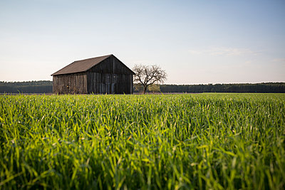 Germany, view to barn with field in the foreground - p300m1140503 by Anke Scheibe