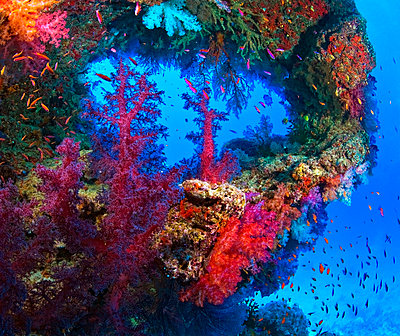 Underwater view of colorful coral - p4429299 by Carson Ganci