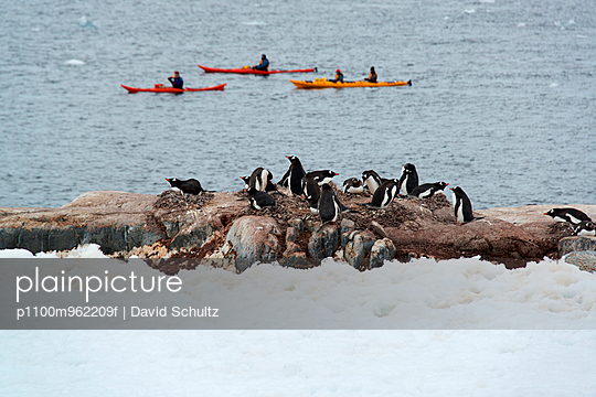 Three sea kayaks on the water off the shore of an Antarctic island. A flock of Gentoo penguins on the shore.