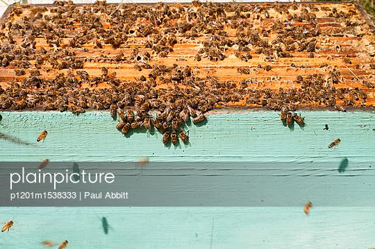 p1201m1538333 von Paul Abbitt