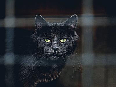 Porträt einer schwarzen Katze - p318m1170038 von Christoph Eberle