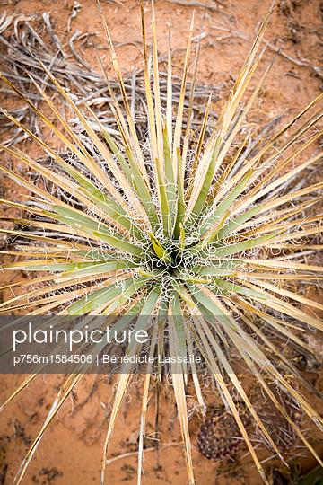 Pflanze - p756m1584506 von Bénédicte Lassalle