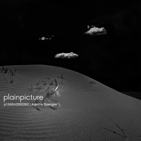 Flower in the desert - p1240m2063362 by Adeline Spengler