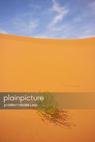 Wüstenstrauch - p1298m1160268 von mic