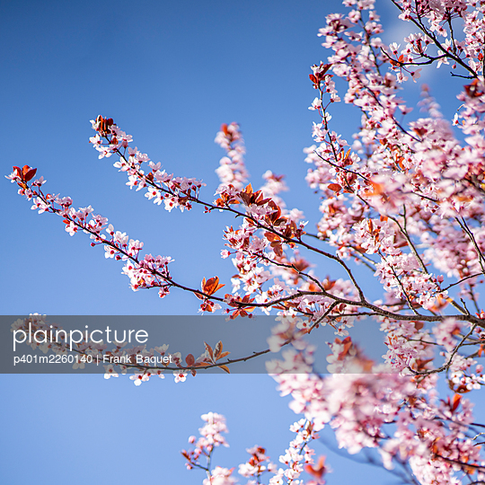 Spring blossoms - p401m2260140 by Frank Baquet