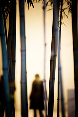 An indoor silhouette of a person behind bamboo, Chicago, Illinois. - p343m1554786 by Ron Koeberer