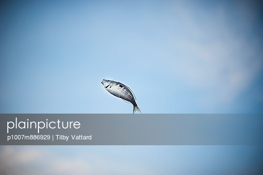 Fish flying - p1007m886929 by Tilby Vattard