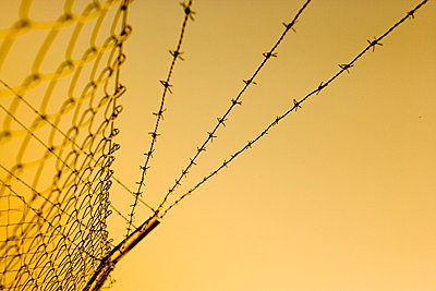 Barbed wire fence - p2480371 by BY