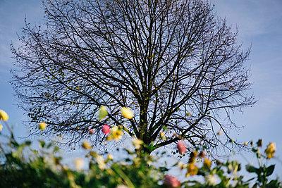 Spring - p586m966602 by Kniel Synnatzschke