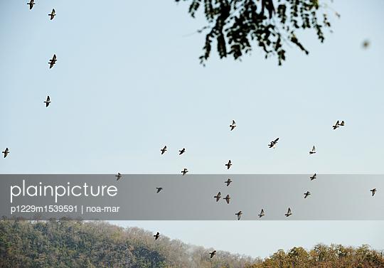 plainpicture - plainpicture p1229m1539591 - Flock of birds - plainpicture/noa-mar