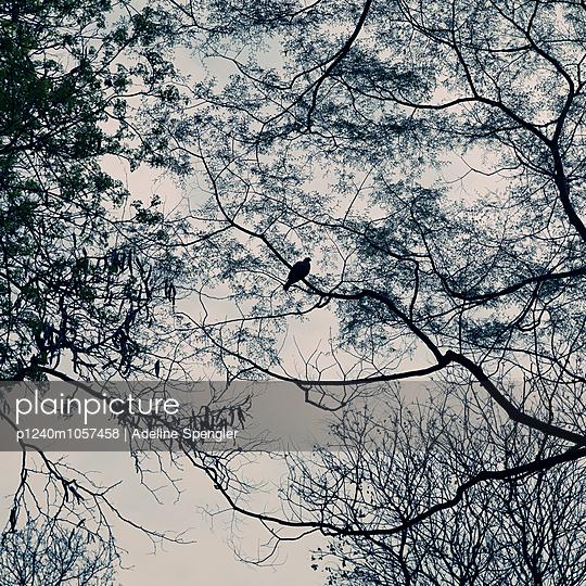 Dove - p1240m1057458 by Adeline Spengler