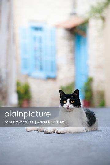 Katze auf der Strasse liegend - p1580m2191511 von Andrea Christofi