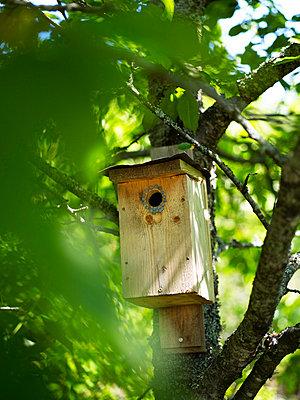 Nesting box on tree - p528m742256f by Anna Kern