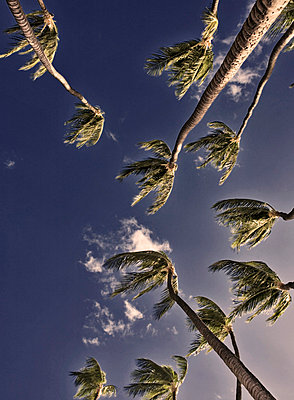 Palm Trees - p6940597 by David Strohl