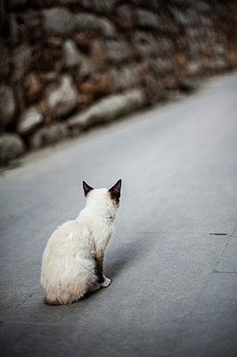 Stray cat - p971m947647 by Reilika Landen