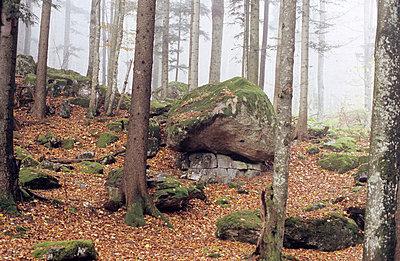 Herbstwald - p2770043 von Dieter Reichelt