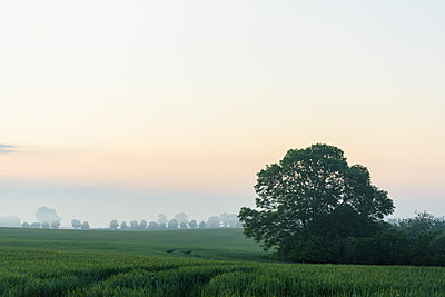 Red sky over landscape with fields - p1273m2031499 by Melanka Helms