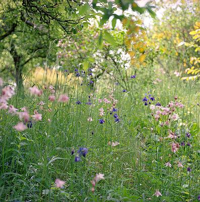 Flower field - p4410272 by Maria Dorner