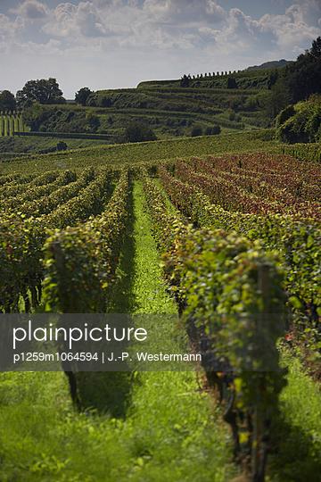 Weingut - p1259m1064594 von J.-P. Westermann