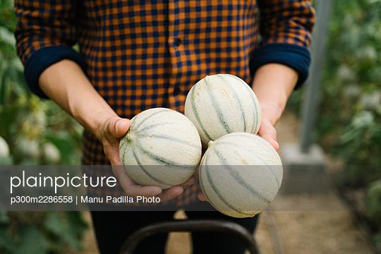 Almeria, Spain. farmer in a greenhouse growing and harvesting organic melons - p300m2286558 von Manu Padilla Photo