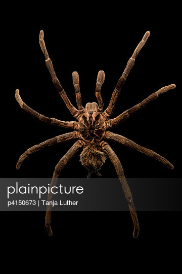 Spinne - p4150673 von Tanja Luther