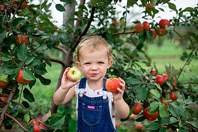 Portrait of cute girl eating apples while standing against fruit trees at farm - p1166m2040021 by Cavan Images