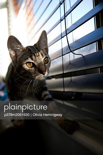 p378m2061630 von Olivia Hemingway
