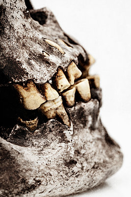 Old Human Skull - p1280m1488282 by Dave Wall