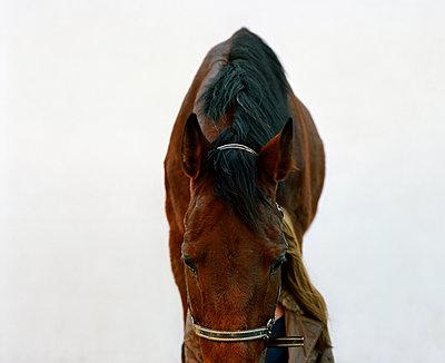 Person hidden behind a horse - p453m2165669 by Mylène Blanc