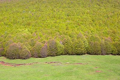 Grünes Meer - p454m2158750 von Lubitz + Dorner