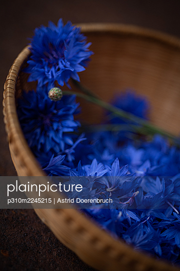 Corn flowers - p310m2245215 by Astrid Doerenbruch