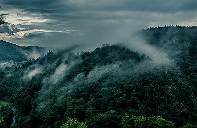 Nebel  - p1512m2037968 von Katrin Frohns