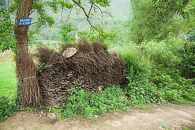 China, guangxi province, yangshuo, bundles of sticks - p9244885f by Image Source