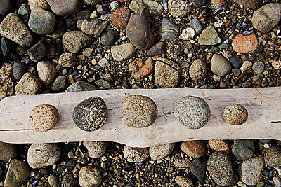 Canada, British Columbia, Vancouver, Five Rocks Made Smooth By The Tide Are Arranged On A Peice Of Driftwood. - p442m934969 by Dave Fleetham
