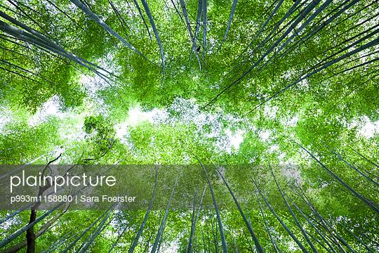 Bambushain in Kyoto, Arashiyama - p993m1158880 von Sara Foerster