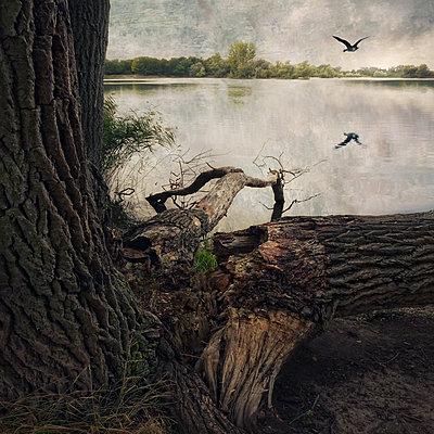 Fliegende Wildgans - p1633m2211108 von Bernd Webler
