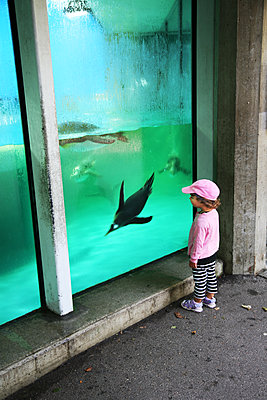 Toddler in front of a aquarium - p375m1586280 by whatapicture