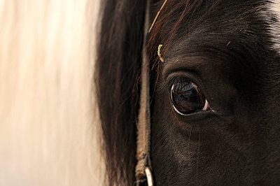 Eye of a horse - p470m758136 by Ingrid Michel