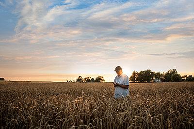Distant Caucasian man examining wheat in field - p555m1522992 by John Fedele
