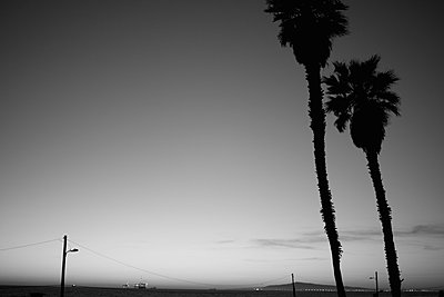 Palm Trees Along Beach, Silhouette, Los Angeles, California, USA - p694m785670 by Justin Hill photography