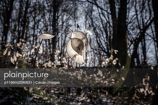 p1166m2090631 von Cavan Images