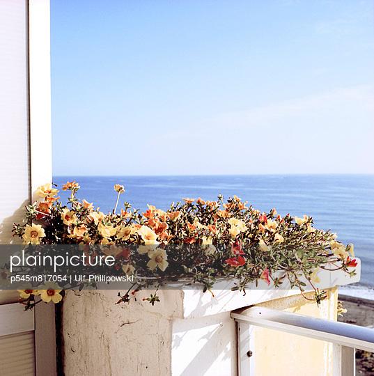 Balkonblumen - p545m817054 von Ulf Philipowski
