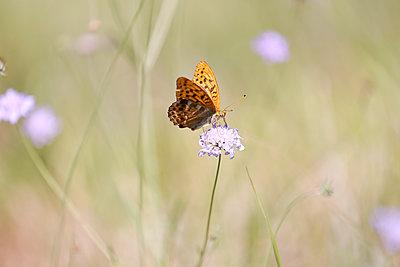 Summer Butterfly - p1307m2020364 by Agnès Deschamps