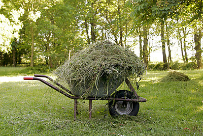 Wheel barrow with hay - p1650442 by Andrea Schoenrock